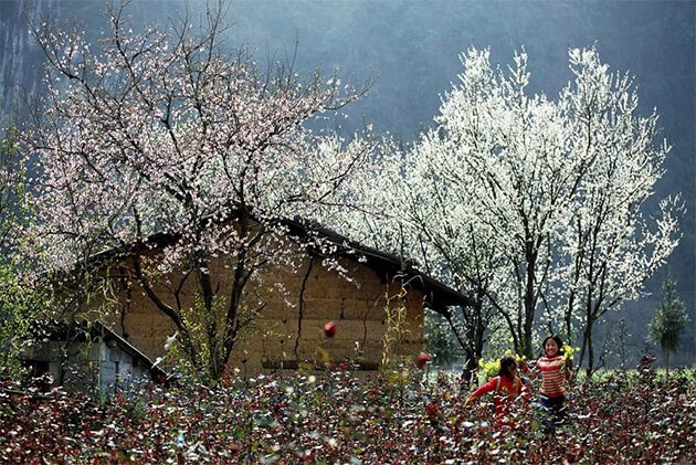 Ban Blossom in North Vietnam Tour