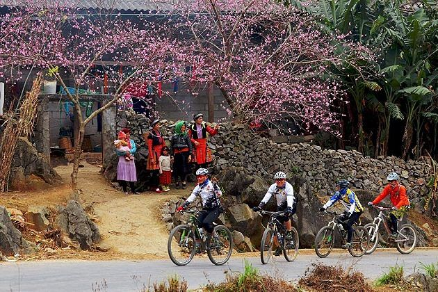 Peach Blossom in Ha Giang