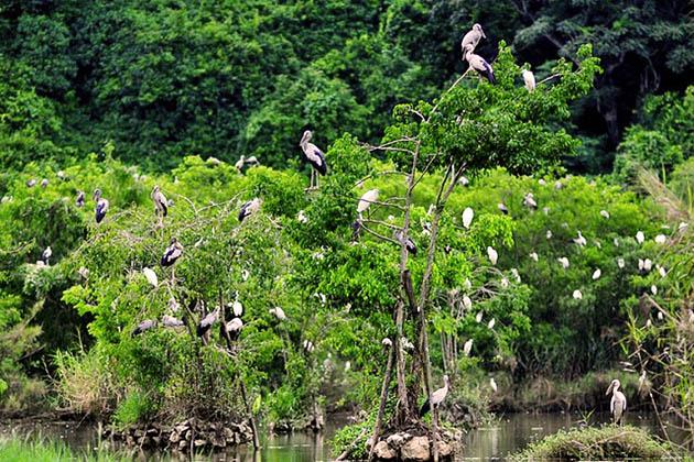 Bird Watching in Cuc Phuong