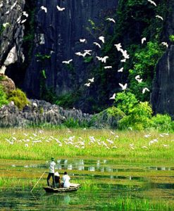 Explore Thung Nham Bird Garden Ninh Binh
