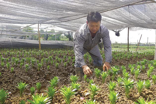 Get to Tay Tuu Flower Village Hanoi