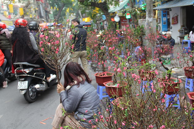 Hang Luoc Flower Market in Tet holiday