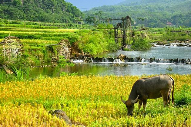 Hanoi - Pu Luong Odyssey Tour