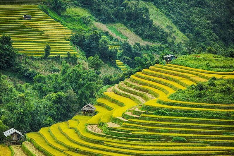 Mu Cang Chai Hanoi Sapa Tour