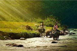 Pu Luong Mai Chau Trekking Tour