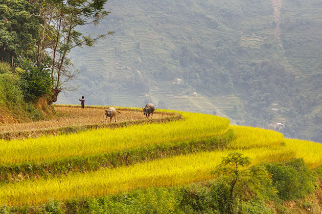 Stunning Hoang Su Phi tour in North Vietnam