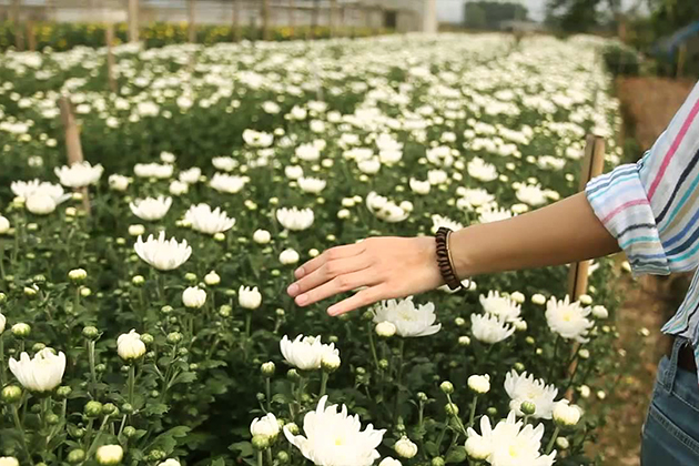 Things to Do See in Tay Tuu Flower Village
