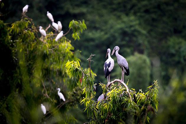 Thung Nham Bird Park Ninh Binh